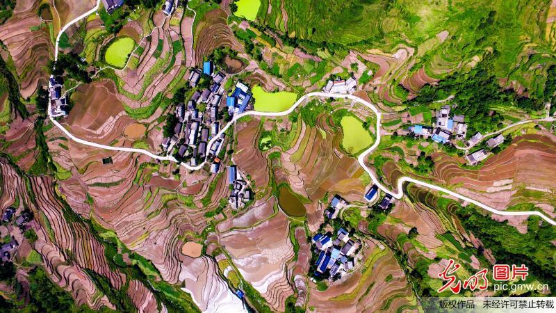 Beautiful terraced fields in China's Chongqing