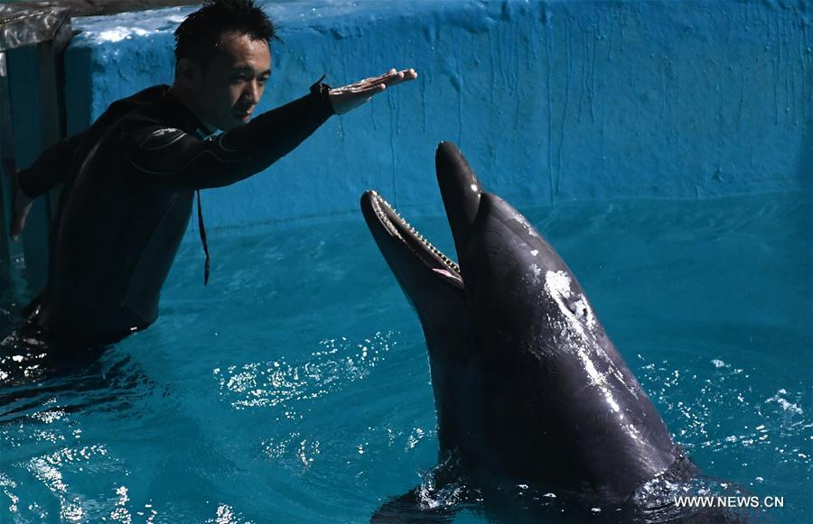 Bottlenose dolphins relocated in NE China's Heilongjiang
