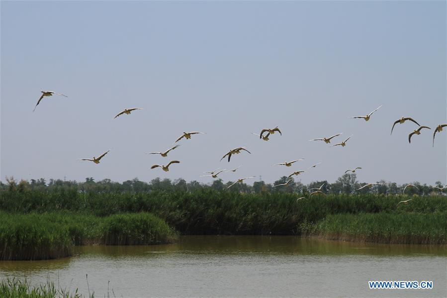CHINA-HEBEI-ENVIRONMENT-WETLAND (CN)