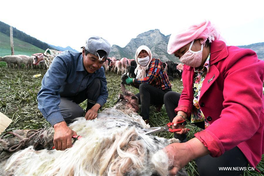 CHINA-GANSU-YAKS-HAIR CUT (CN)
