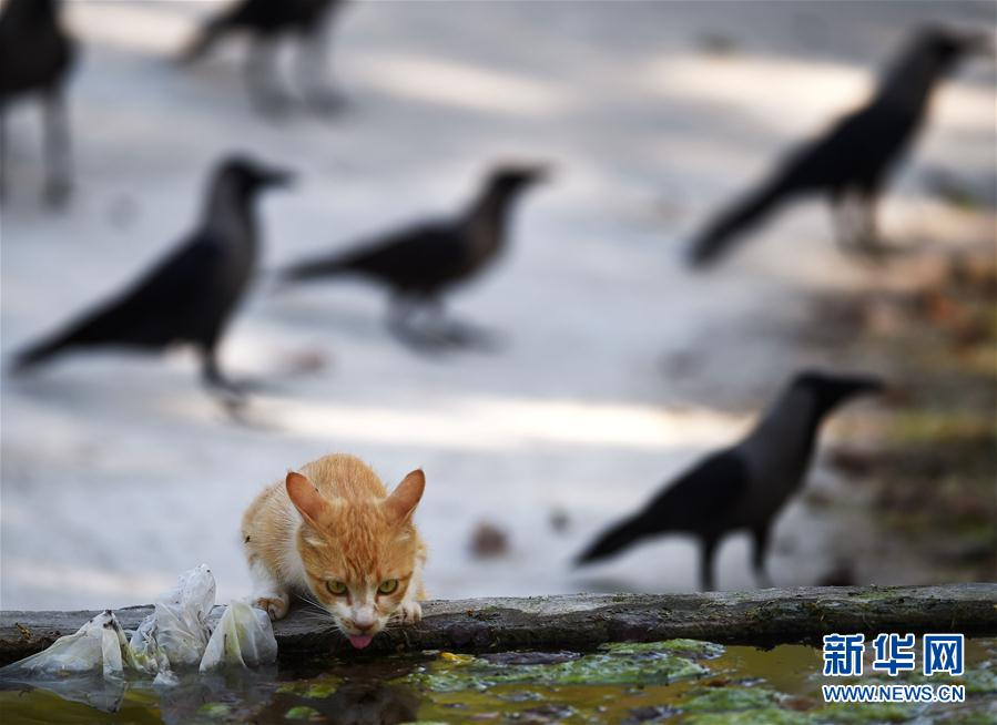 In pics: view of a kitty is drinking water in ISB