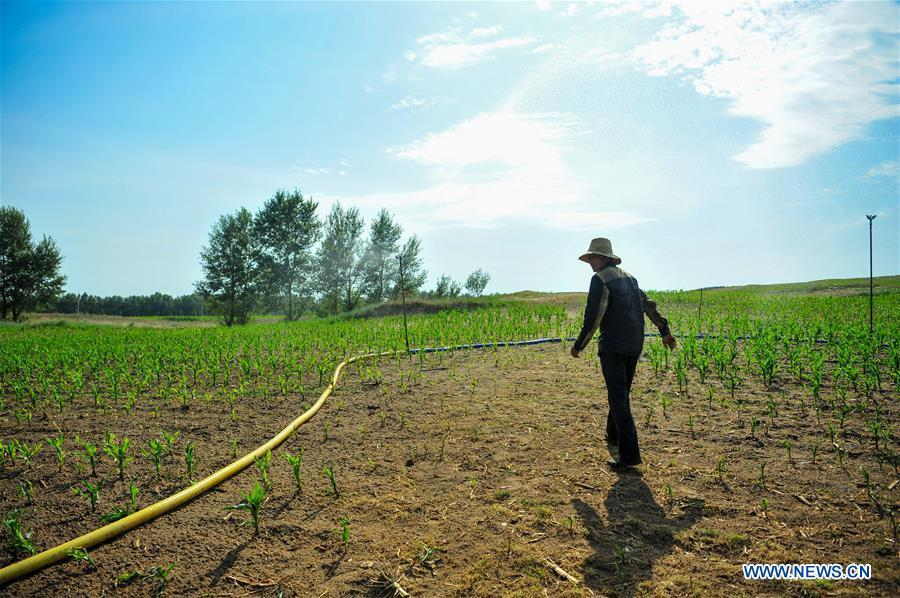Drought hits farmland in N China's Inner Mongolia