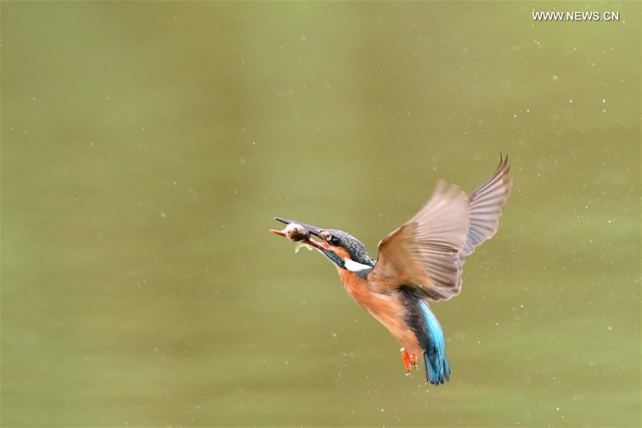 CHINA-FUZHOU-KINGFISHER (CN)