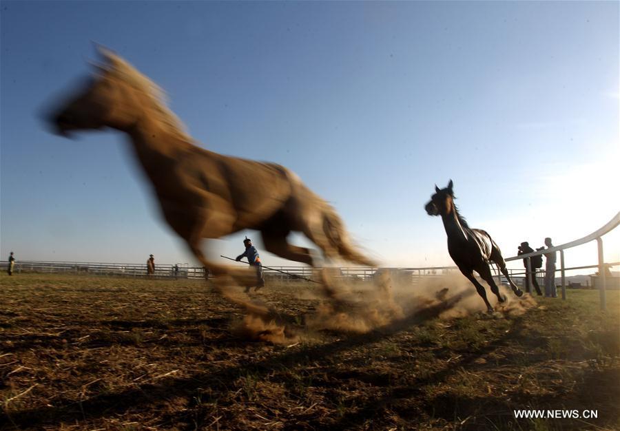 #CHINA-INNER MONGOLIA-XILINGOL-HORSE(CN)