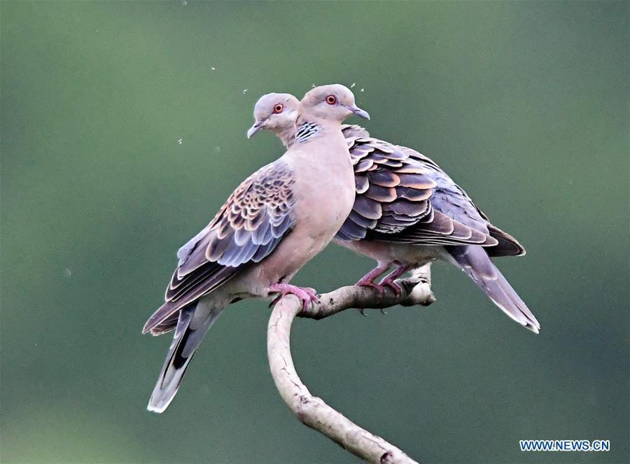 CHINA-FUJIAN-ENVIRONMENT-BIRD WATCHING (CN)