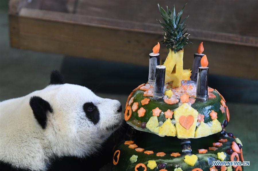 CHINA-TAIPEI-GIANT PANDA-BIRTHDAY (CN)