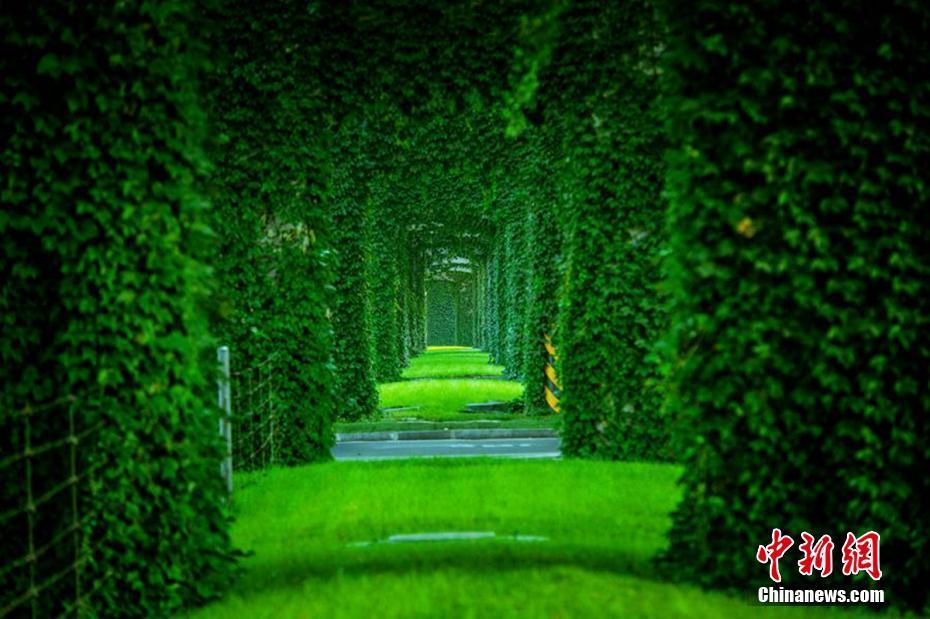 Amazing photos of green corridor in China's Chengdu City