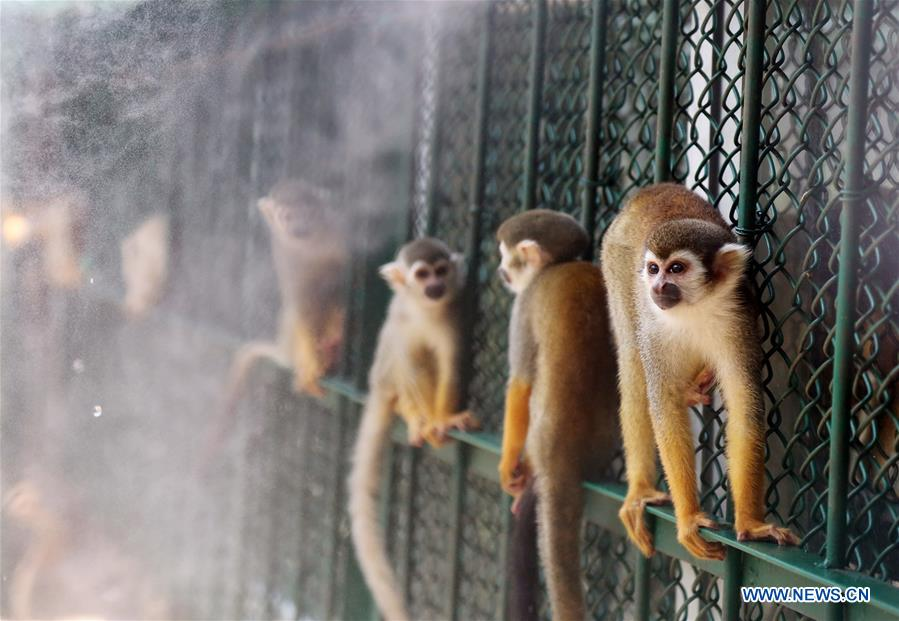 #CHINA-QUANZHOU-MONKEY(CN)