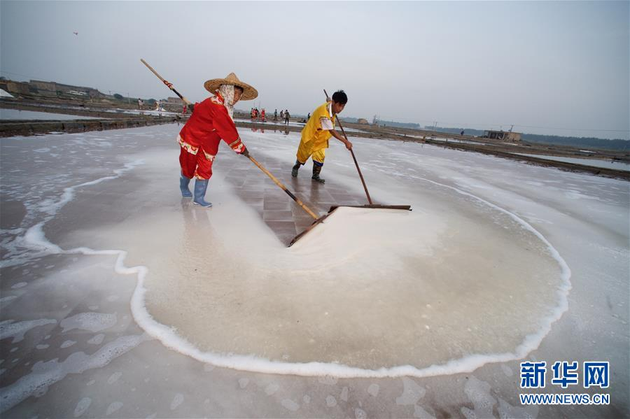 Workers collect salt during salt farming season in China's Fujian