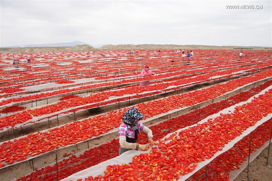 #CHINA-XINJIANG-DRIED TOMATO INDUSTRY(CN)