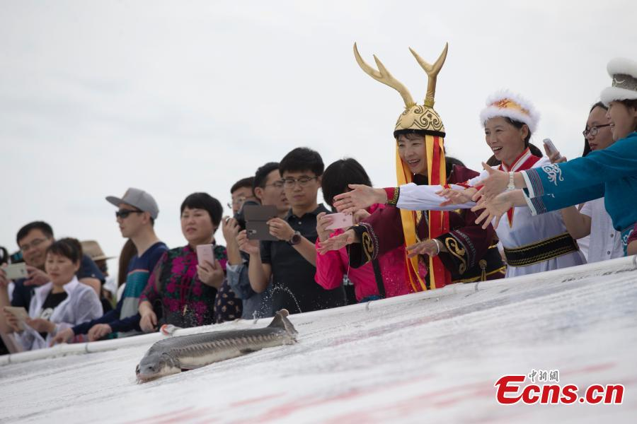 200,000 fish fry released into Heilong River