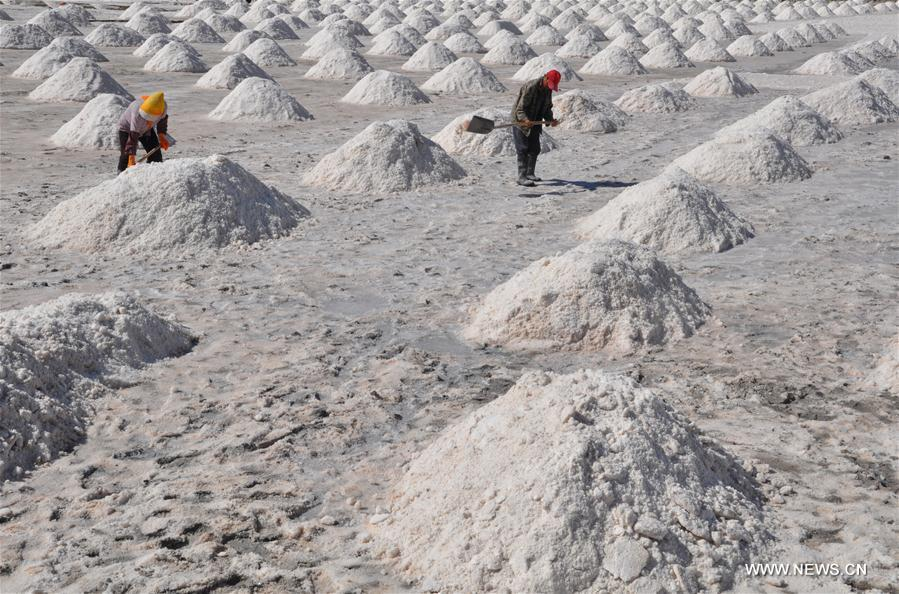 #CHINA-GANSU-ZHANGYE-SALT HARVEST (CN)