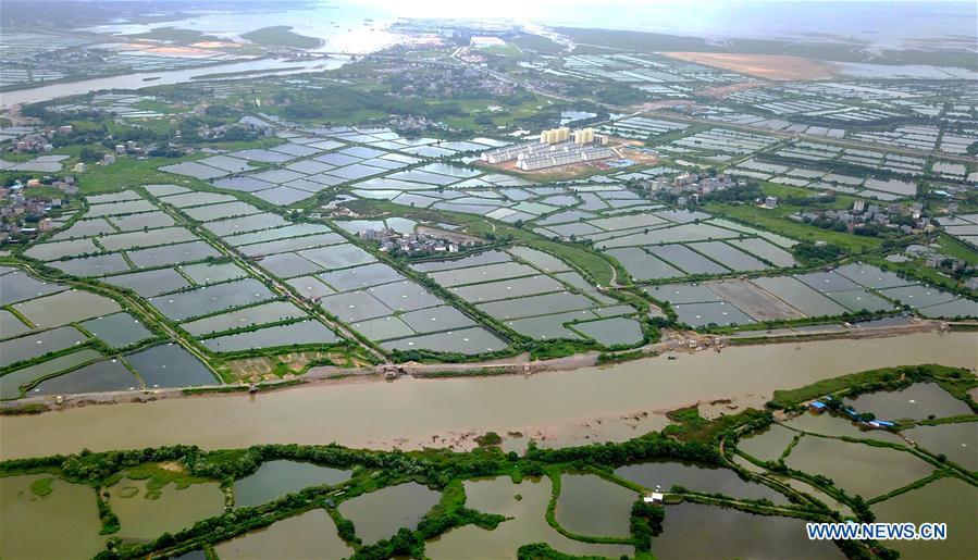 CHINA-GUANGXI-QINZHOU-SHRIMP-ECONOMY(CN)