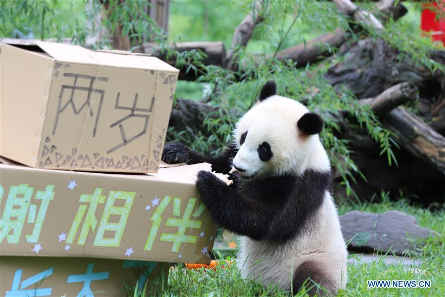 CHINA-SICHUAN-GIANT PANDA TWINS-BIRTHDAY(CN)