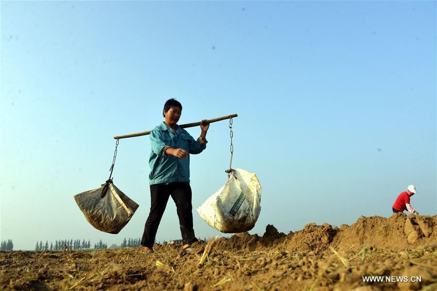 #CHINA-VILLAGES-FARM WORK (CN)