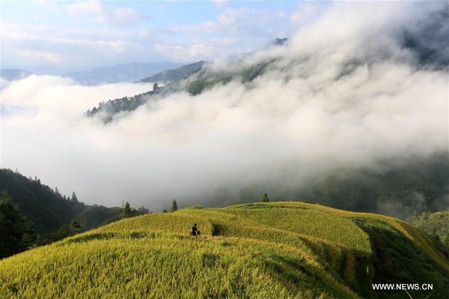 #CHINA-GUIZHOU-AUTUMN-SCENERY (CN)