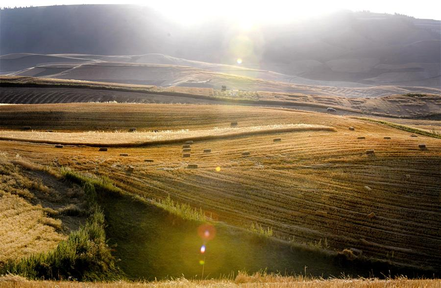 CHINA-XINJIANG-WHEAT-HARVEST SCENERY(CN)