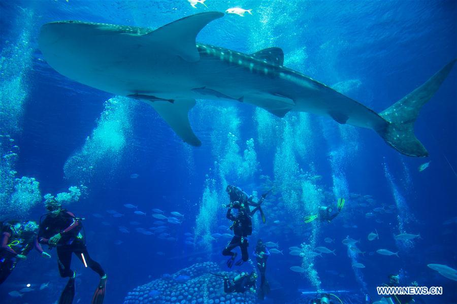 CHINA-GUANGDONG-ZHUHAI-WHALE SHARK (CN)