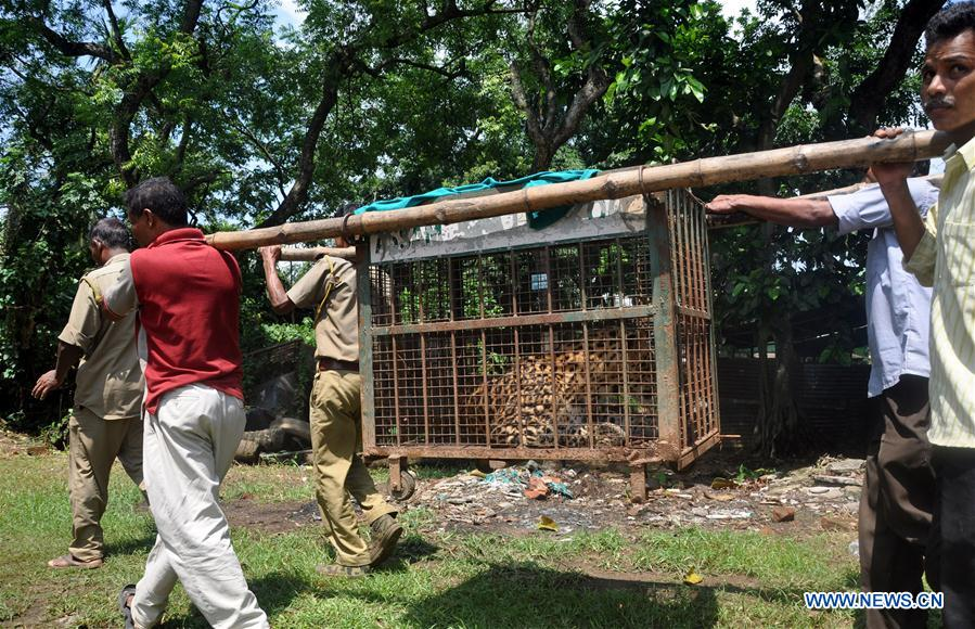 INDIA-GUWAHATI-WILD LEOPARD-SEIZED AT RESIDENCE