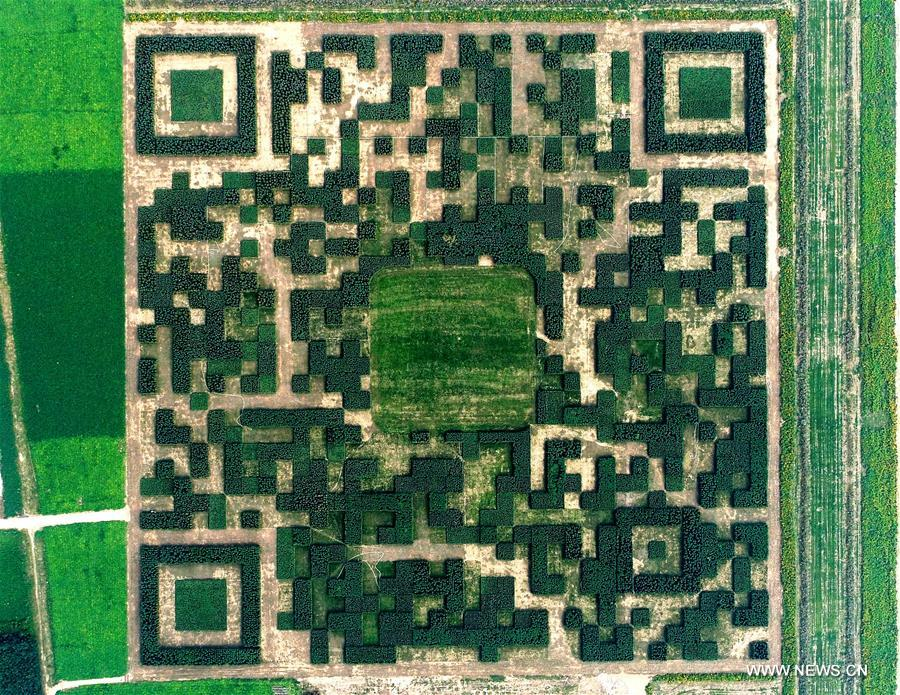 CHINA-HEBEI-BAODING-GIANT QR CODE (CN)