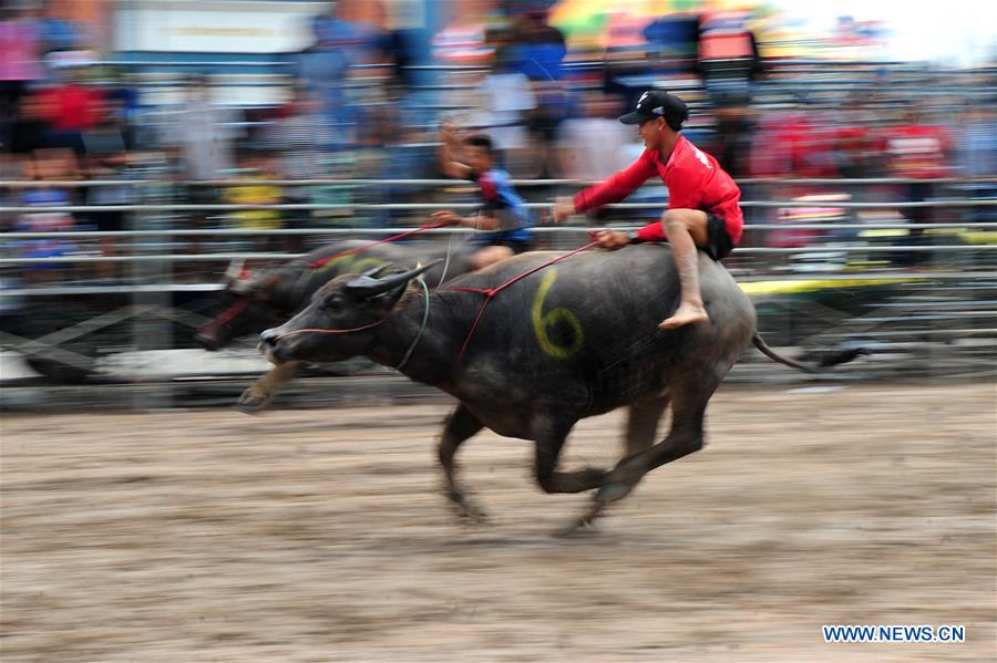 THAILAND-CHONBURI-BUFFALO RACING