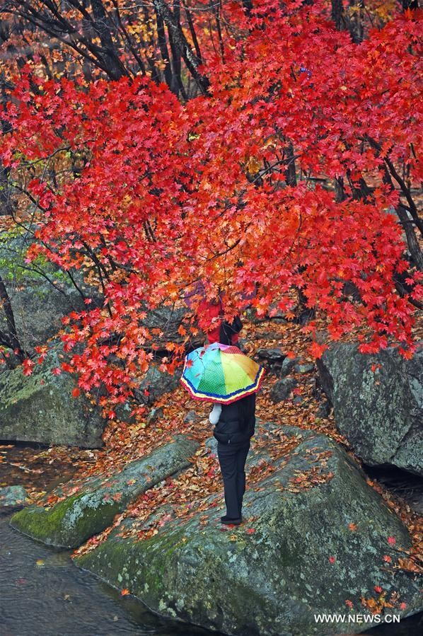 CHINA-LIAONING-AUTUMN SCENERY (CN)