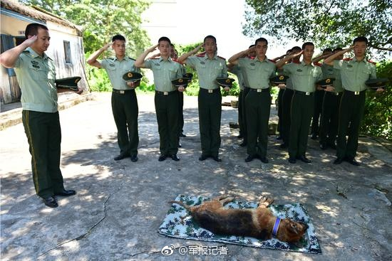 Police dog with meritorious service remembered in Guangdong