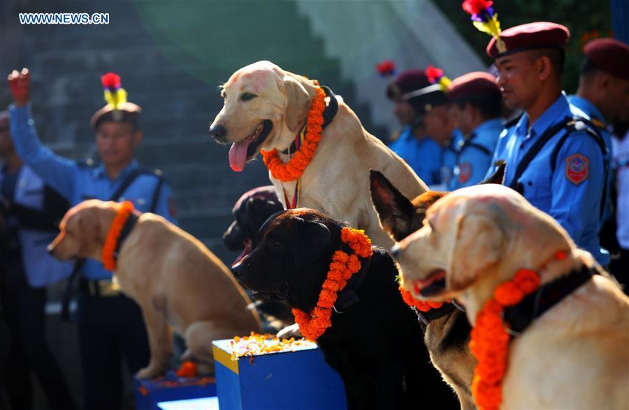 NEPAL-KATHMANDU-TIHAR FESTIVAL-DOG WORSHIPPING DAY