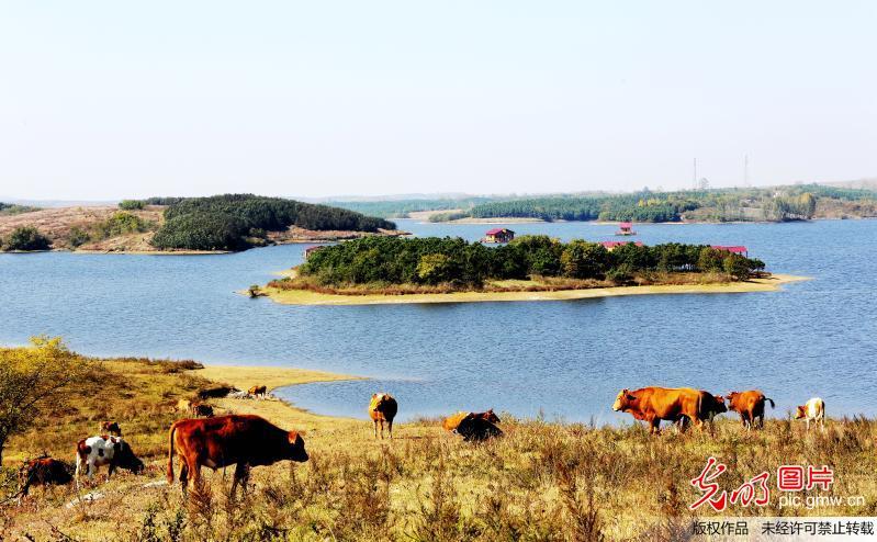 安徽明光:生态草原黄寨牧场秋意浓