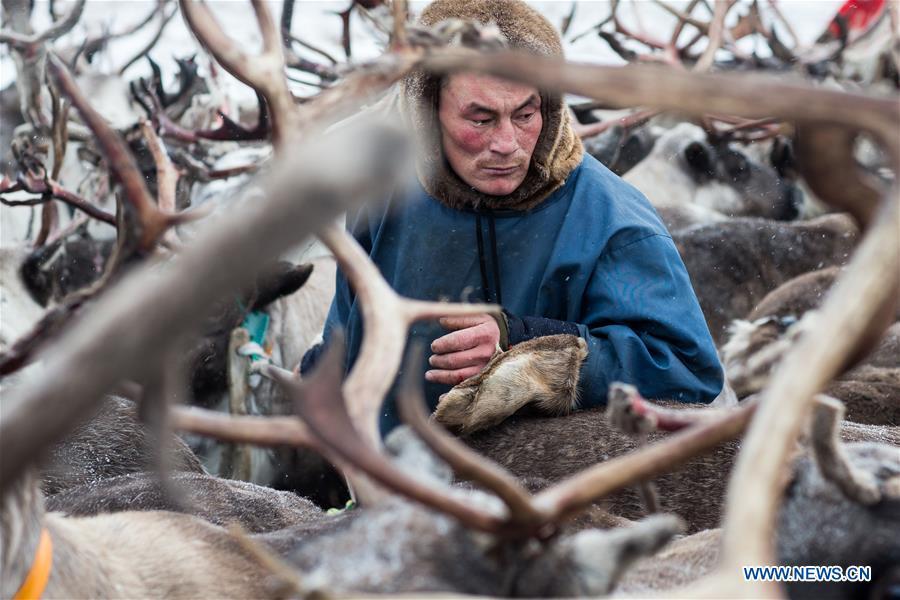 RUSSIA-SALEKHARD-DAILY LIFE-NENETS