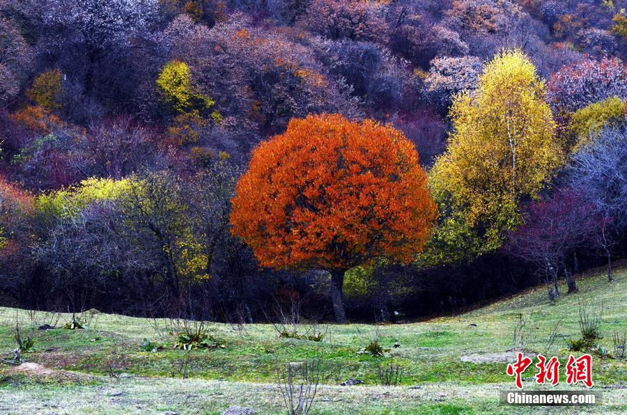 Picturesque scenery of Laoye Mountain in NW China's Gansu