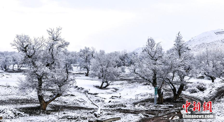 Rime scenery seen in NW China's Xinjiang