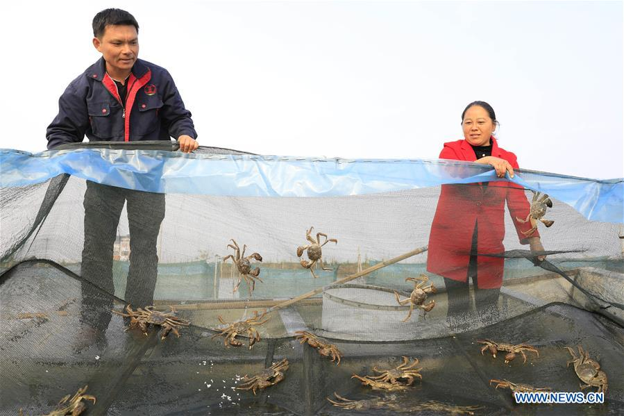 #CHINA-JIANGSU-HONGZE LAKE-CRABS (CN)