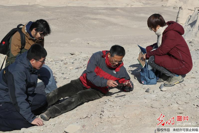 Rare fossilized eggs of pterosaurs found in China's Xinjiang