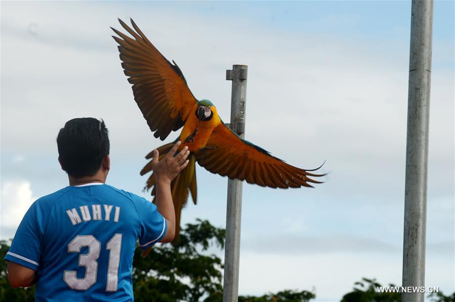 INDONESIA-SOUTH TANGERANG-PARROTS-COMPETITION