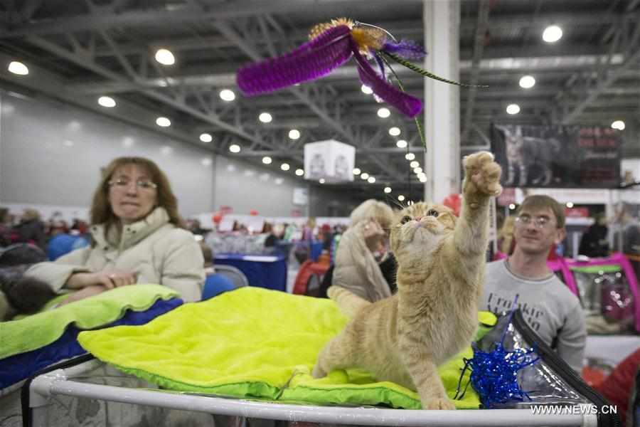 RUSSIA-MOSCOW-CAT SHOW