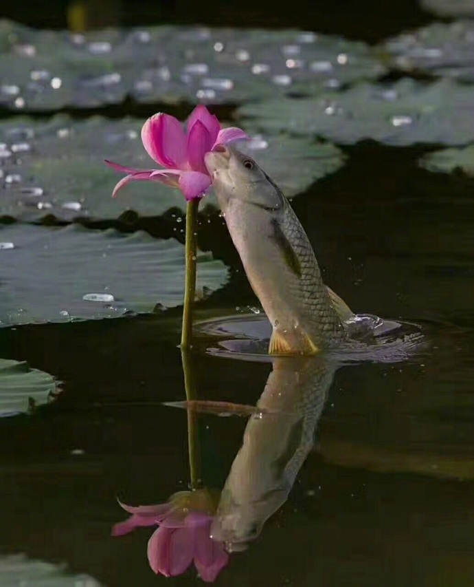 It is rare to see this beautiful moment between the fish and flower.