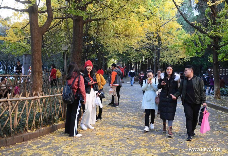 CHINA-YUNNAN-KUNMING-GINKGO-SCENERY (CN)