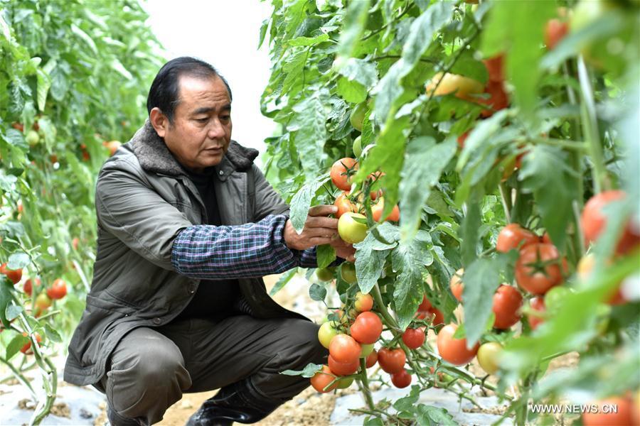 #CHINA-WINTER-FARM WORK (CN)