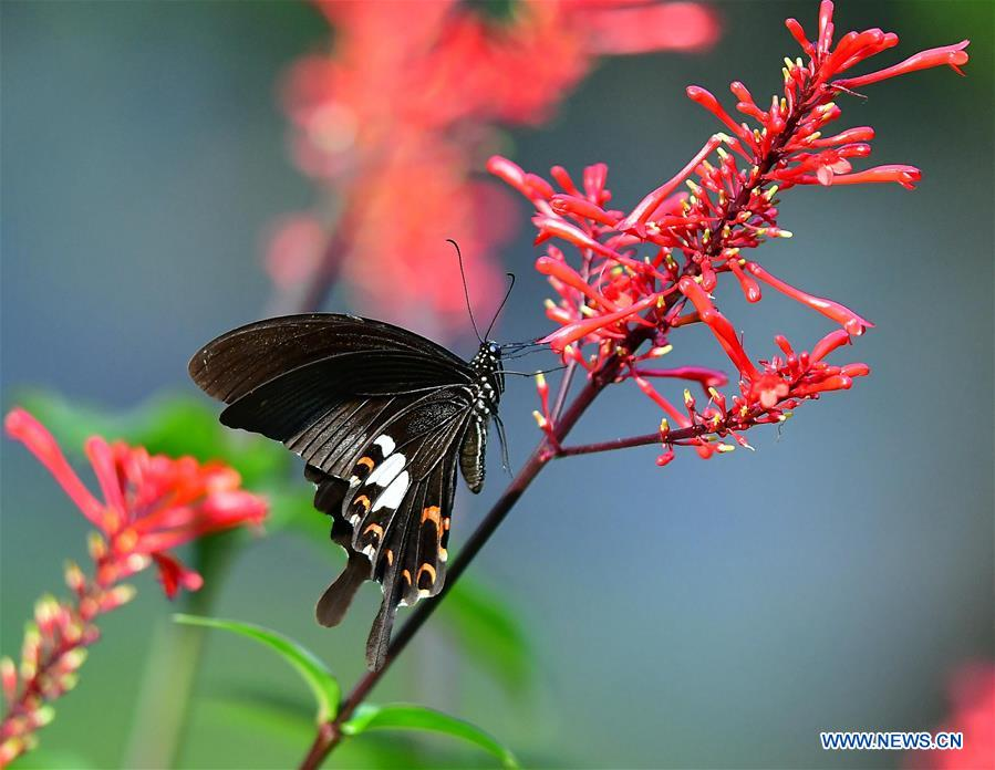 CHINA-FUZHOU-SCENERY-BUTTERFLY (CN)