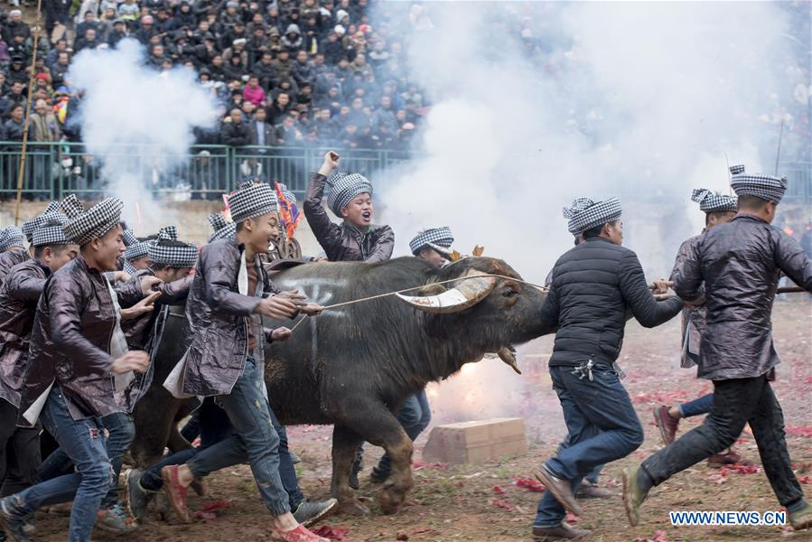 #CHINA-GUIZHOU-CONGJIANG-BULLFIGHT(CN)