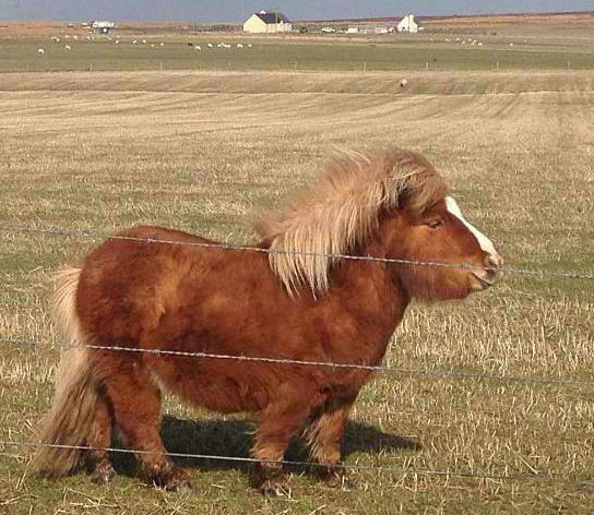 cute cute pony, sweet sweet baby