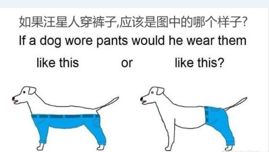 What would it be like if a dog wore pants?