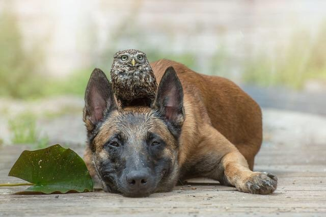 So moved. Friendship beyond species
