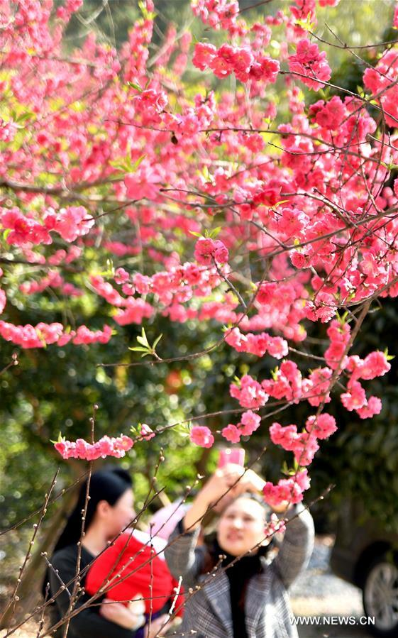 #CHINA-SPRING-BLOSSOMING FLOWERS (CN)