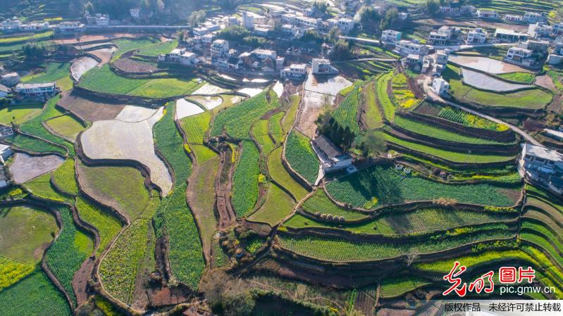 Spring scenery at village in C China
