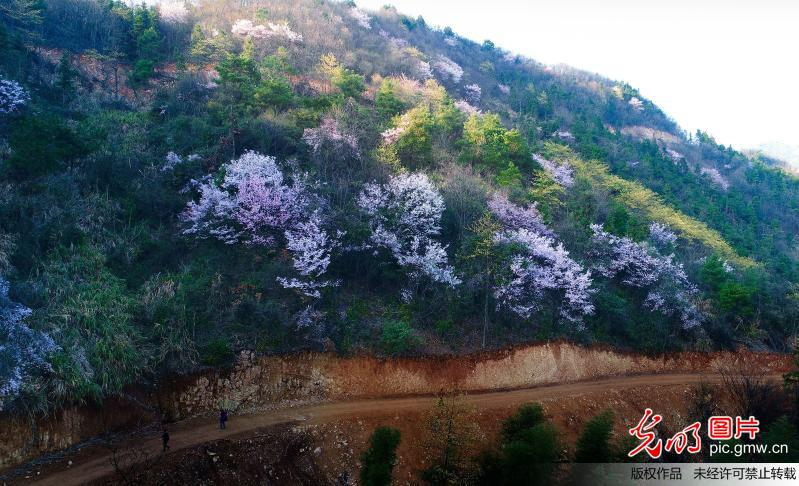 Flowers in full blossom in C China's Hunan Province