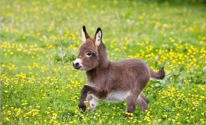 Adorable donkey cubs