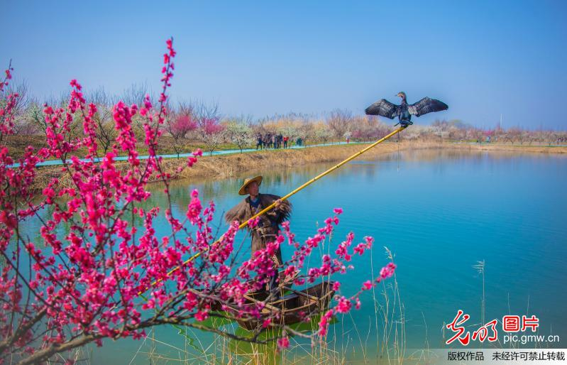 Cormorants and fisherman attract tourists in E China