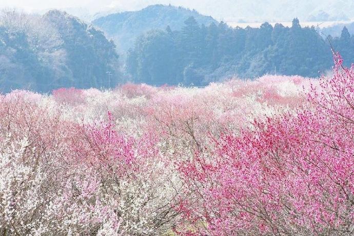 Bairin Park in Japan